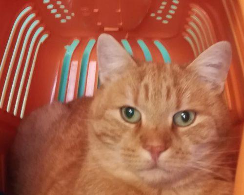 7926 Garfield