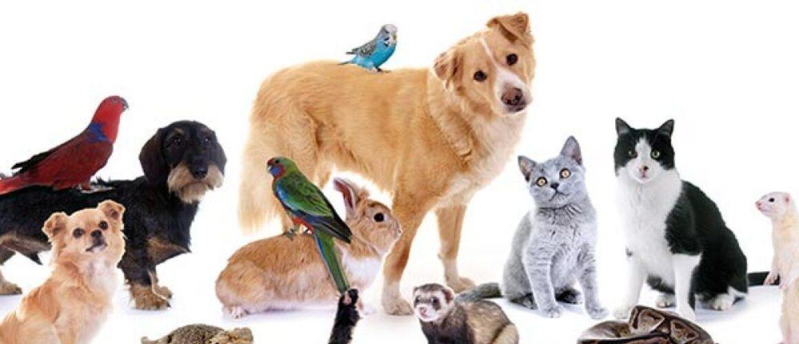 Mitarbeiter/in für das Tierheim Graz gesucht!