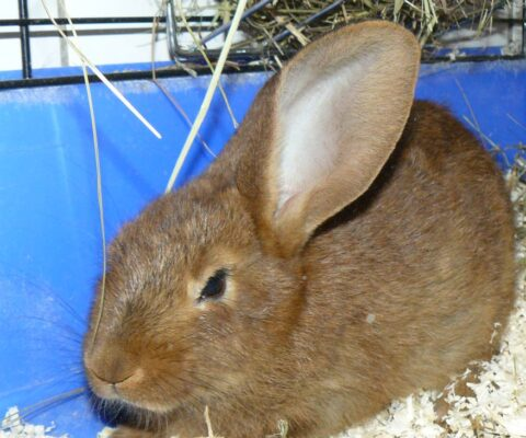 Rabbit 19647