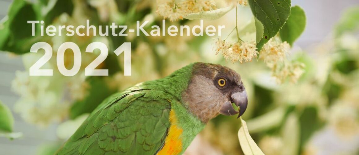 Tierschutz-Kalender 2021