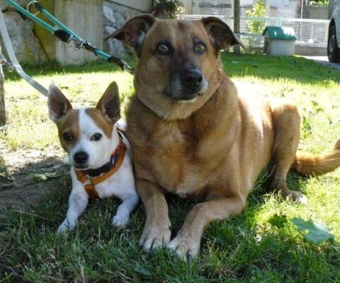 Djanga und Rocco